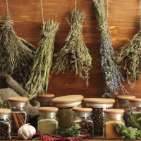 Traditional Medicine Consultancy
